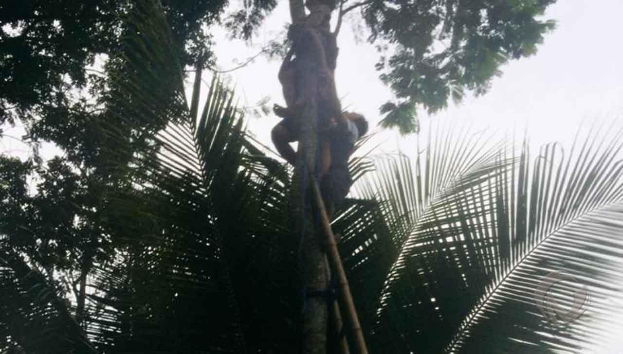 Evakuasi korban saat diatas pohon setinggi 12 meter